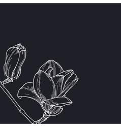 Magnolia on black background vector image