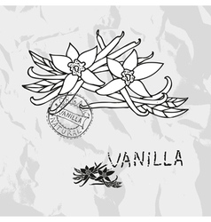 Hand drawn vanilla vector