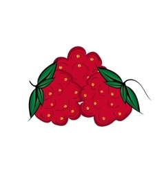 Hand drawn raspberries berries close up vector