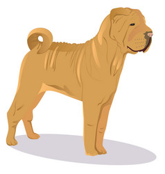 chinese shar pei dog vector image
