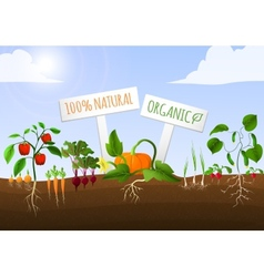 Vegetable garden poster vector image vector image