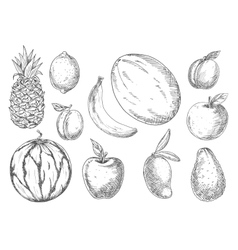 Delicious tropical and local fruits sketch icons vector image vector image