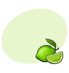 Whole and quarter of unpeeled green lime sketch vector