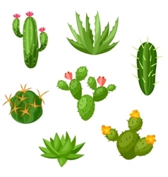 Collection of abstract cactuses and plants vector image
