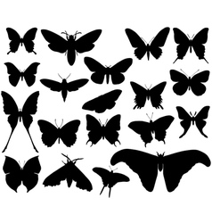 butterfly 2 vector image vector image