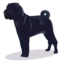 chinese shar pei blue dog vector image