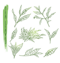 sketch of tea leaves set with silhouettes vector image vector image