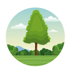 Tree pine forest landscape stamp vector