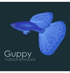 Aquarium fish Guppy isolated vector image