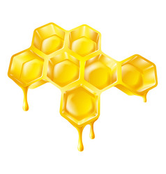 Honeycomb with dripping honey vector
