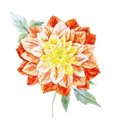 Watercolor dahlia flowers vector image