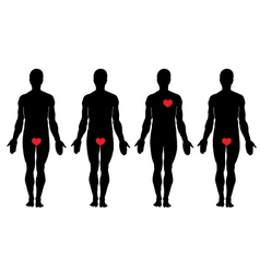 anatomy of love vector image