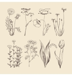 Wildflowers herbs and flowers spring or summer vector