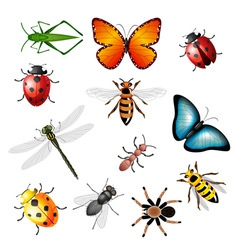 Collection of insects vector