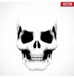 Human skull in sketch style vector