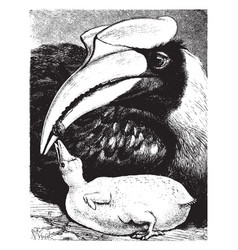 Female hornbill laying down feeding her young vector