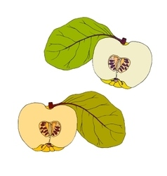 Yellow quince with leaves vector