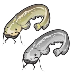 Two large well-fed and fatty whiskered catfish vector