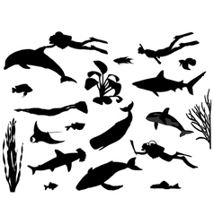 Divers vector image