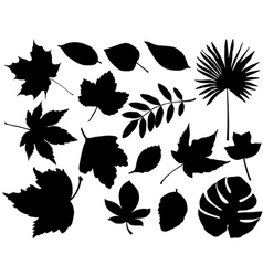foliage silhouette vector image