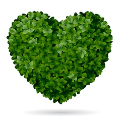 Boxwood heart vector