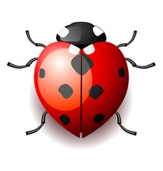 Heart form ladybird vector