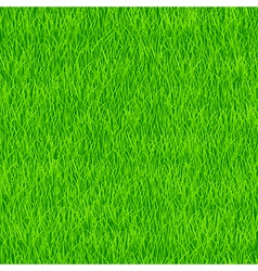 grass pattern vector image