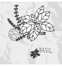 Hand drawn basil vector