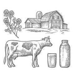 Set milk farm cow head clover glass and bottle vector