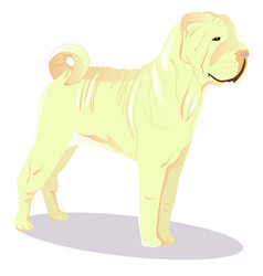 chinese shar pei white dog vector image