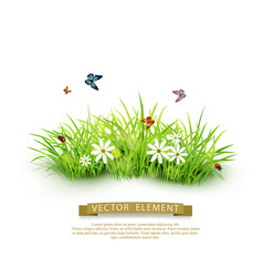 element for design green grass isolated vector image
