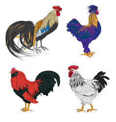 rooster series vector image vector image