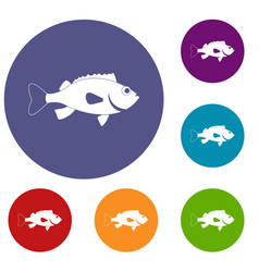 Sea bass fish icons set vector