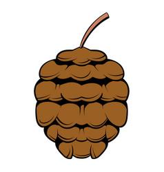 Cedar cone icon cartoon vector