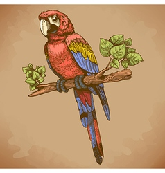 Engraving big parrot retro vector