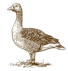Engraving goose vector