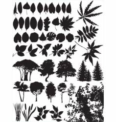 trees grass leaf plant vector image