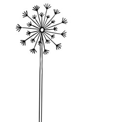 Hand drawn black silhouette dandelion on a white vector