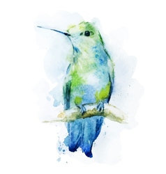 Watercolor colibri bird vector image