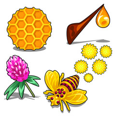 healthy honey set of five items isolated vector image