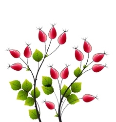 Rose hip vector