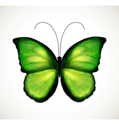 Bright green butterfly vector image vector image