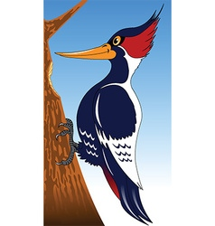 Woodpecker cartoon vector