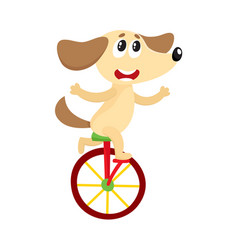 Cute little dog puppy character riding bicycle vector
