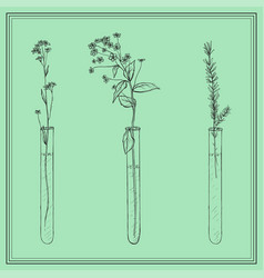 Hand drawn lavender plants flowers in vitro vial vector