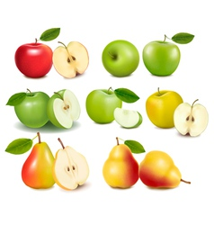 set of red and green apple fruits vector image vector image