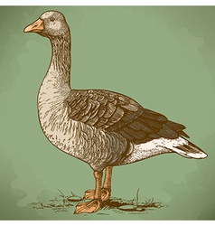 Engraving goose retro vector