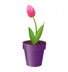 tulip in pot vector image