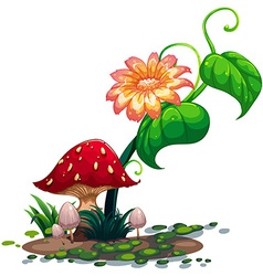 A flowering plant and mushrooms vector image vector image