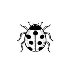 ladybug hand drawn sketch icon vector image